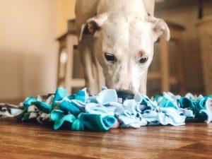 DIY Snuffle Matt Dogs' Refuge Home